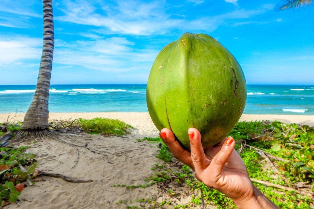 coconut-2485888_1920