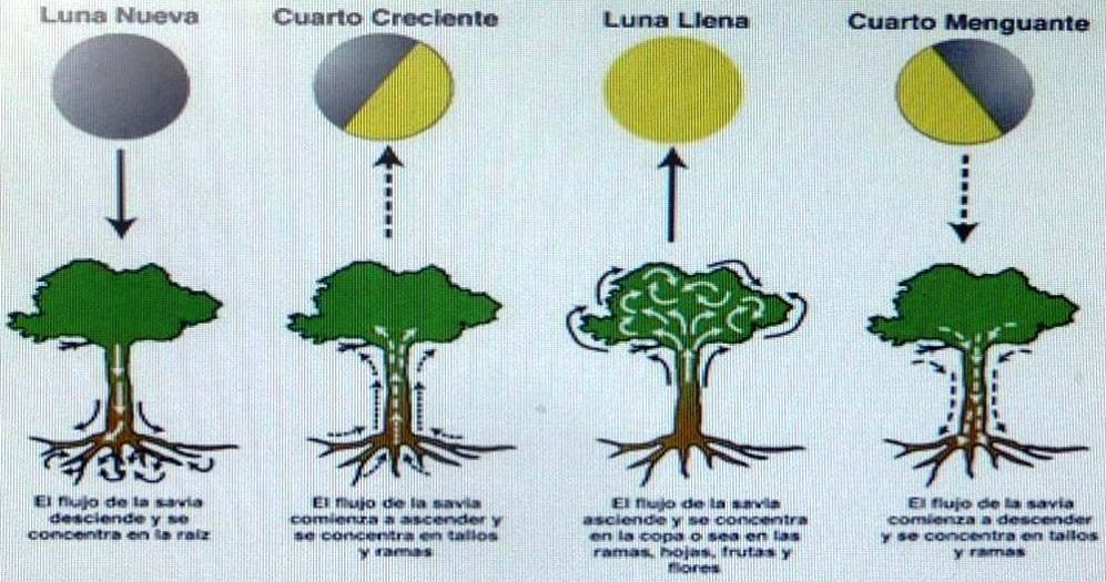 Luna Humus Huno